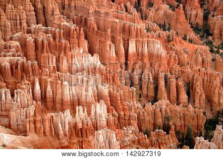 Collection of hoodoos in the amphitheater at Bryce Point, Bryce Canyon National park