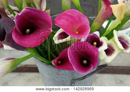 Farmer market calla lilies in metal milking can