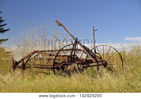 A rusty old side delivery rake is surrounded by the autumn weeds.