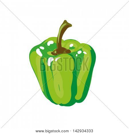 Green paprika bell pepper. Fresh vegetable. Vector Illustration. Isolated on white.
