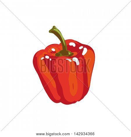 Red paprika bell pepper. Fresh vegetable. Vector Illustration. Isolated on white.