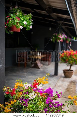 Hanging colorful tropical flowers for exterior gardening