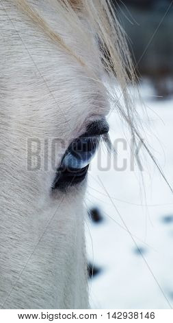 Stunning detailed close up of a horse's blue eye