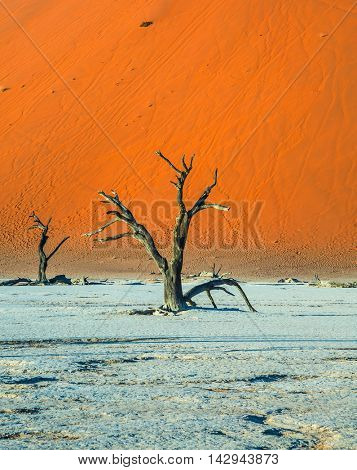 The bottom of dried lake Deadvlei. Picturesque ancient dried-up tree. Namibia, ecotourism in Namib-Naukluft National Park