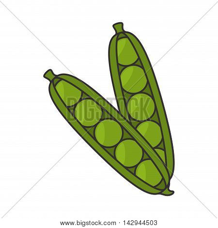 pea vegetable pod plant food nutrition organic natural  vector illustration isolated