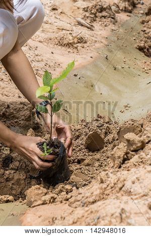 People are planting trees . Afforest.. Save forest.