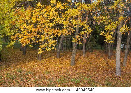 Nature scene of colorful trees during autumn season