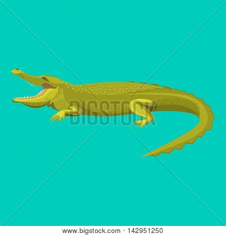 Dangerous green alligator is showing his teeth, colorful flat vector illustration