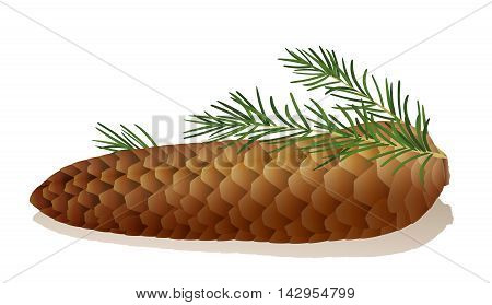 Illustration of a spruce cone with spruce needles.