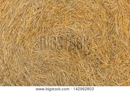 round bale of hay close-up. daylight light Golden straw in the bale of hay