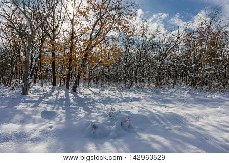 snowdrifts in the winter woods on a sunny day