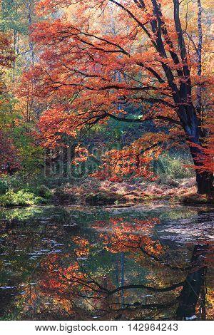 Slow Autumn River