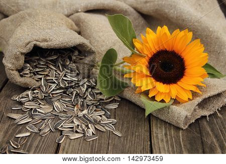 Sunflower and sunflower seeds in a bag on a table in a garden