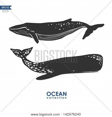two whales isolated on white, vector illustration: cachalot and big blue whale