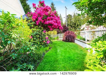 Yellow House Backyard Area With  Blooming Rhododendron