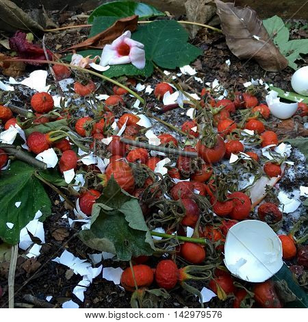 Fresh bio-waste and compost with rose hips in the garden