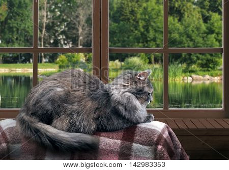 Cat on the balcony at the window. Outside pond green trees in the park. Cat large gray furry