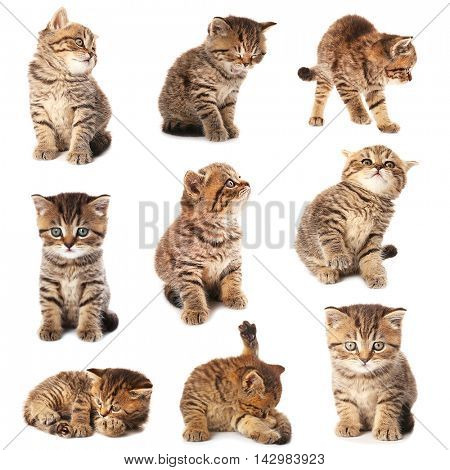 Small cute kitten collection, isolated on white