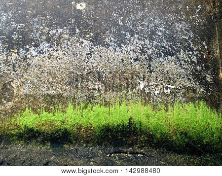 Waterfront Wall Texture