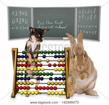 cute Bunny and Chihuahua On the first day of school school