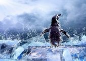Постер, плакат: Пингвин на льду в капли воды