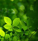 image of green leaves  - green leaves background in sunny day - JPG