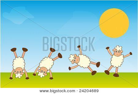 Handstand Sheep
