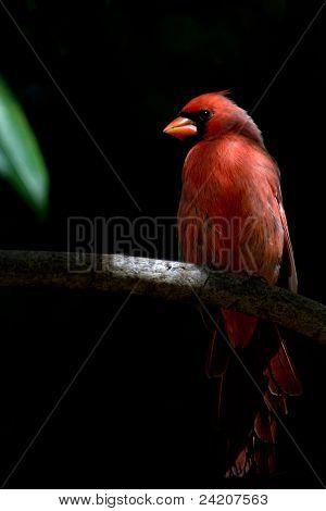 Cardinal Spotlight