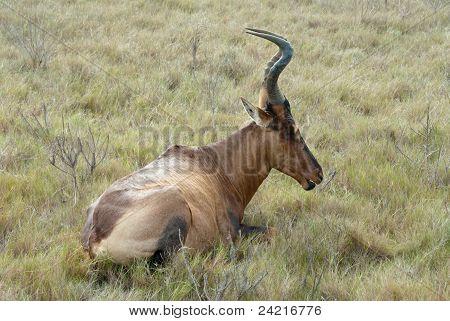 Antelope's Rest