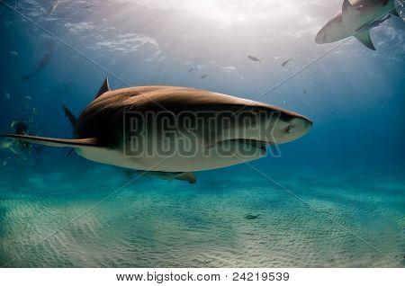 Passing Shark