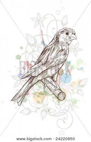 Sketch of a canary bird sitting on a branch & floral calligraphy ornament - a stylized orchid,  color paint background. Bitmap copy my vector ID 70697107