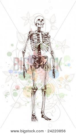 Skeleton sketch & floral calligraphy ornament - a stylized orchid & color paint background. Bitmap copy my vector ID 70695130