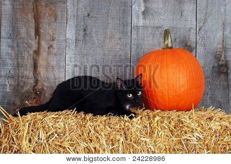 black cat with a pumpkin