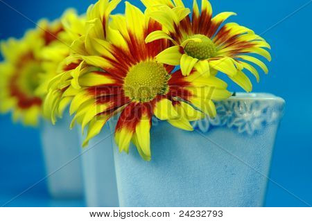 Bright Yellow Chrysanthemum on Blue Background