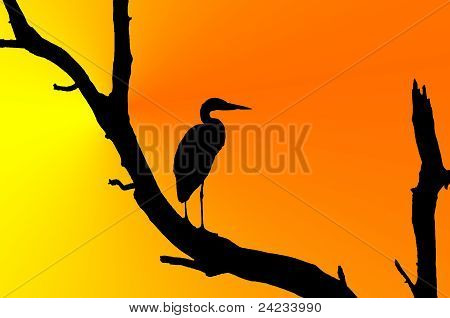 Silhouette of great blue heron
