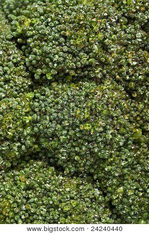 Broccoli Cabbage Texture