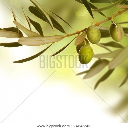 Olive Branch border design. Growing Olives