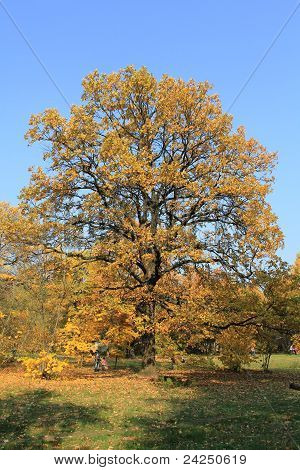 Forest,autumn