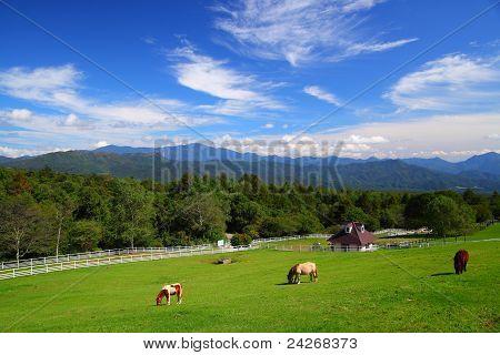 Horse of plateau