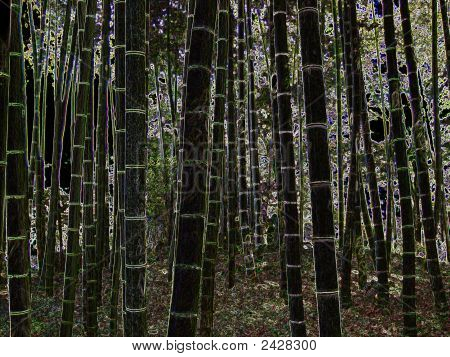 Nightsky Forest Bamboo