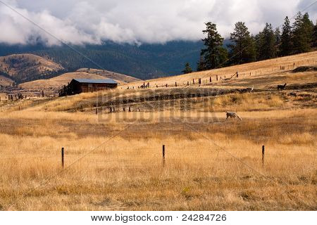 Homestead en Montana.