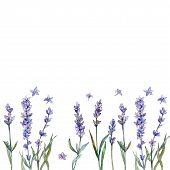 Violet Lavender. Floral Botanical Flower. Frame Border Ornament Square. Aquarelle Wildflower For Bac poster