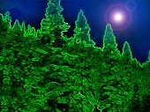 picture of watle  - Nightsky Forest III Night Sky at The Redwood Forest - JPG