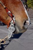 picture of buckaroo  - Western Equestrian Bit And Headstall on Horse - JPG