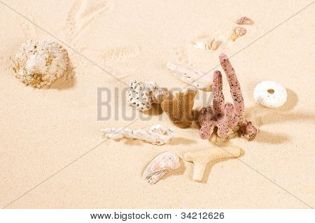 Dried corals and shell on sand.Concept of seawater Pollution in the world.  This pictures belongs to the Sea Things series in my portfolio