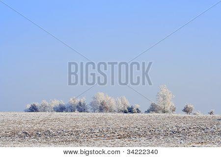 Frozen Plowed Fields And Trees