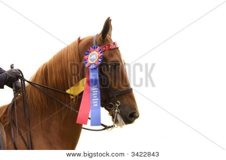 Closeup Of Winning Saddlebred Horse