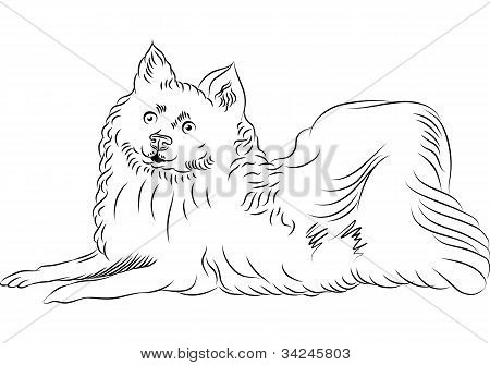 Vektor Skizze American Eskimo Dog Breed liegend