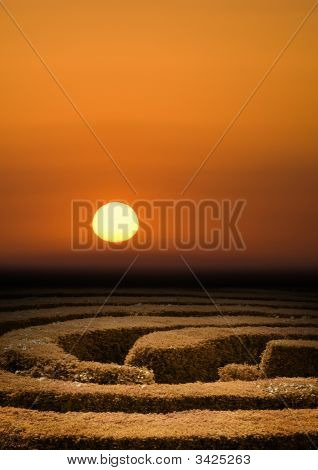 Hedge Maze Sunset