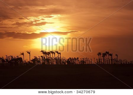 Sunset in the desert - Palm Silhouettes